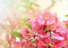 Картинки весны сочинение вступление
