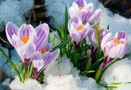 Сочинение миниатюра на тему Весна Сочинение на  Весна сочинение